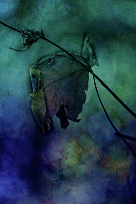 Moonlight Serenade Art Print by Bonnie Bruno