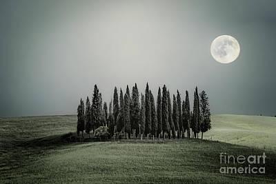 Photograph - Moonlight Serenade by Evelina Kremsdorf