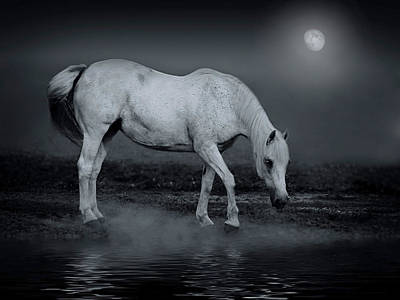 Hanoverian Photograph - Moonlight Shadow by Joachim G Pinkawa