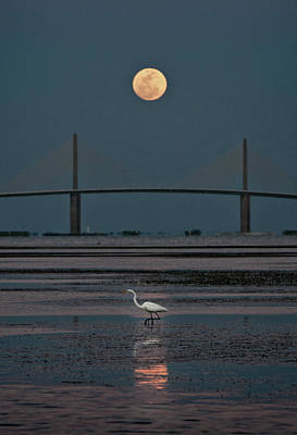Photograph - Moonlight Stroll by Steven Sparks