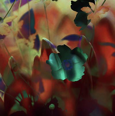 Photograph - Moonlight Waltz Of Flowers by Jenny Rainbow