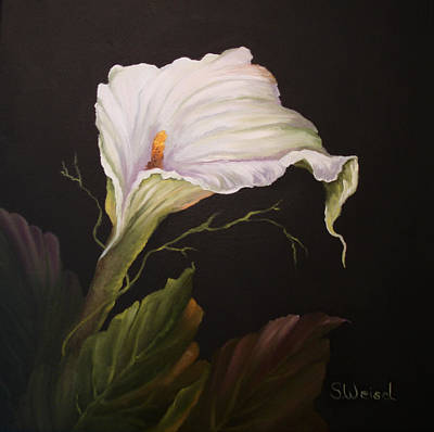 Moonlit Calla Lily Art Print by Sherry Winkler