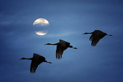 Art Print featuring the photograph Moonlit Flight by Susan Rissi Tregoning