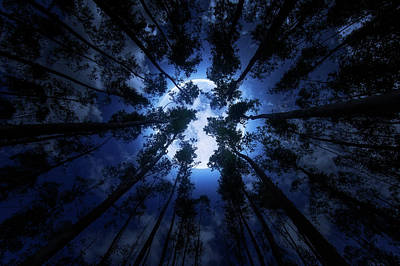 Photograph - Moonlit Forest by Justin Kelefas