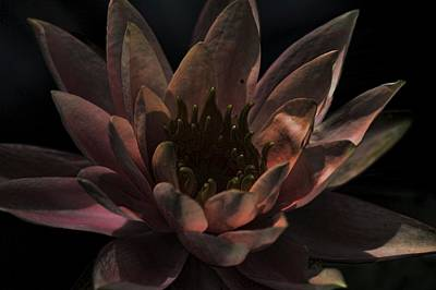 Photograph - After Midnight Lily by Lesa Fine