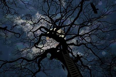 Dandelion Digital Art - Moonlit Night by John Haldane