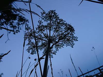 Photograph - Moonlit Umbrel Sillhouetted  by Susan Baker