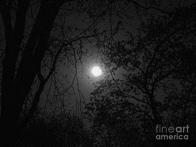 Photograph - Moonlit Woodland by Ann Horn