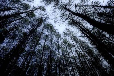 Moonlite Forest Print by M K  Miller