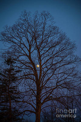 Photograph - Moonrise by Alana Ranney