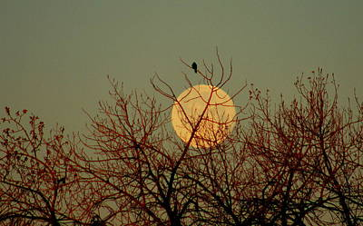 Mark Wagner Wall Art - Photograph - Moonset At Sunrise by Mark Wagner