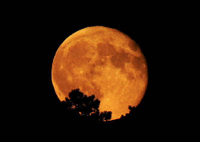 Man In The Moon Photograph - Moonrise Over Pines by Dawn Key