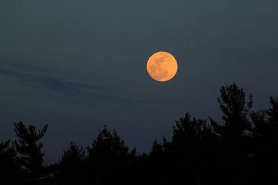 Photograph - Moonrise Over Pines by John Burk