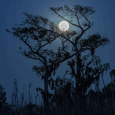 Photograph - Moonrise Over Wetlands by Stefan Mazzola
