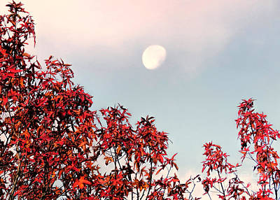 Photograph - Moonset In Autumn by Janice Drew