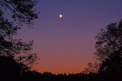 Photograph - Moonset In Pink Sky by Kathryn Meyer