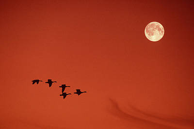 Photograph - Moonset by Tony Beck