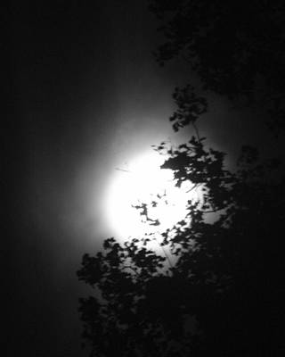 Photograph - Moonshine Through The Leaves by Emery Graham