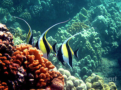 Photograph - Moorish Idols Over Coral by Bette Phelan