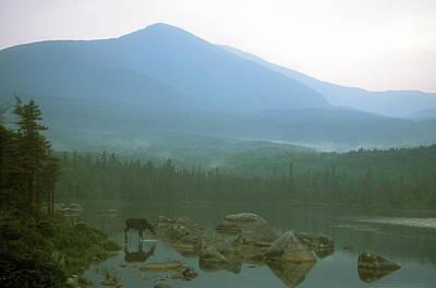 Moose And Mount Katahdin Pamola Art Print by John Burk