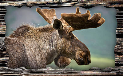 Nature Art Mixed Media - Moose Collection by Marvin Blaine