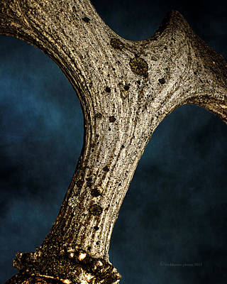 Photograph - Moose Horn Curves by Fred Denner