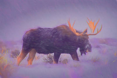 Moose In A Blizzard Art Print