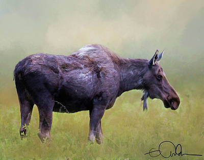 Digital Art - Moose In A Field by Gloria Anderson