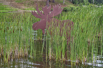Photograph - Moose In Bulrushes by Sue Smith