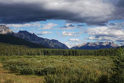 Photograph - Moose Meadows, Alberta by Heather Vopni
