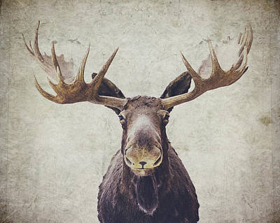 Textured Photograph - Moose by Nastasia Cook