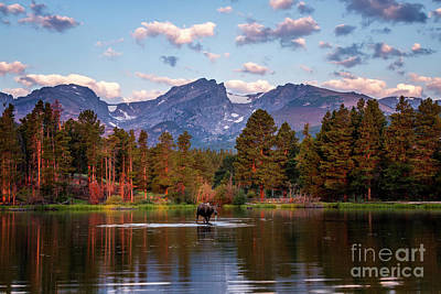 Photograph - Moose On Sprague Lake Rocky Mountain National Park by Ronda Kimbrow