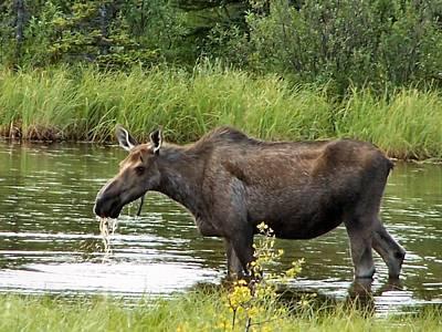 Art Print featuring the photograph Moose Pond by Adam Owen