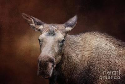 Photograph - Moose Portrait by Eva Lechner