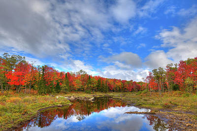 Photograph - Moose River Tributary by David Patterson