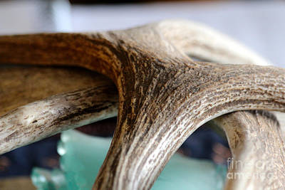 Photograph - Moose Shed by Ann E Robson