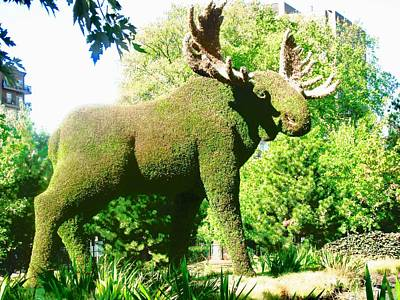 Photograph - Moose by Stephanie Moore
