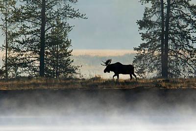 Moose Surprise Art Print