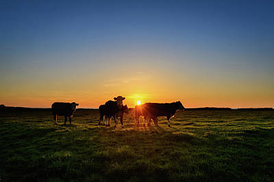Photograph - Moo'set by Florian Walsh