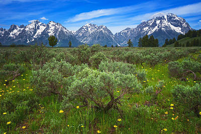 Photograph - Moran Meadows by Darren  White