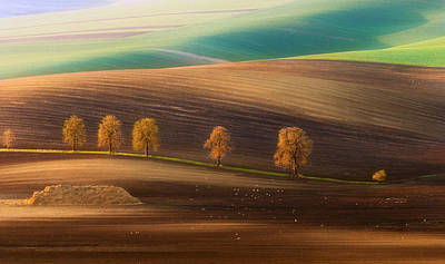 Agriculture Photograph - Moravian Trees by Piotr Krol (bax)