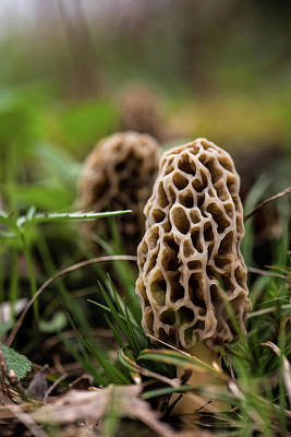 Photograph - Morchella Aka Morels by Linda Shannon Morgan