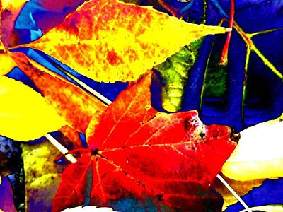 Photograph - More Abstract Leaves  by Beth Akerman