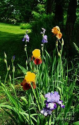 More Backyard Flowers Original by Marsha Heiken