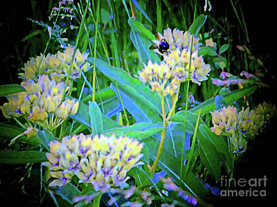 Photograph - More Bees In Blooms by Shirley Moravec