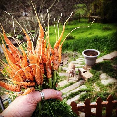 Food And Beverage Photograph - Carrot Picking by Nancy Ingersoll