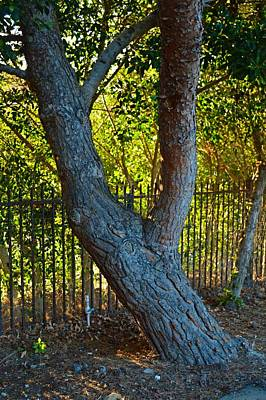 Thomas Kinkade Royalty Free Images - More Light Through The Trees in Malibu Royalty-Free Image by Tommi Trudeau