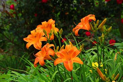 Photograph - More Orange Daylilies by Kathryn Meyer