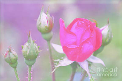 Photograph - More Roses On The Way by Lydia Holly