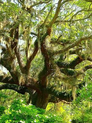 Photograph - More Spanish Moss Please by Beth Akerman